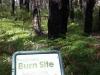 Old Burn Area ...