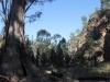Walk along Mambray Creek