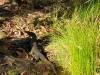 Buley Rockhole