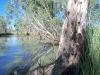 Go'n'do - Chambers Creek