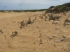 Fossils on the Coorong ...