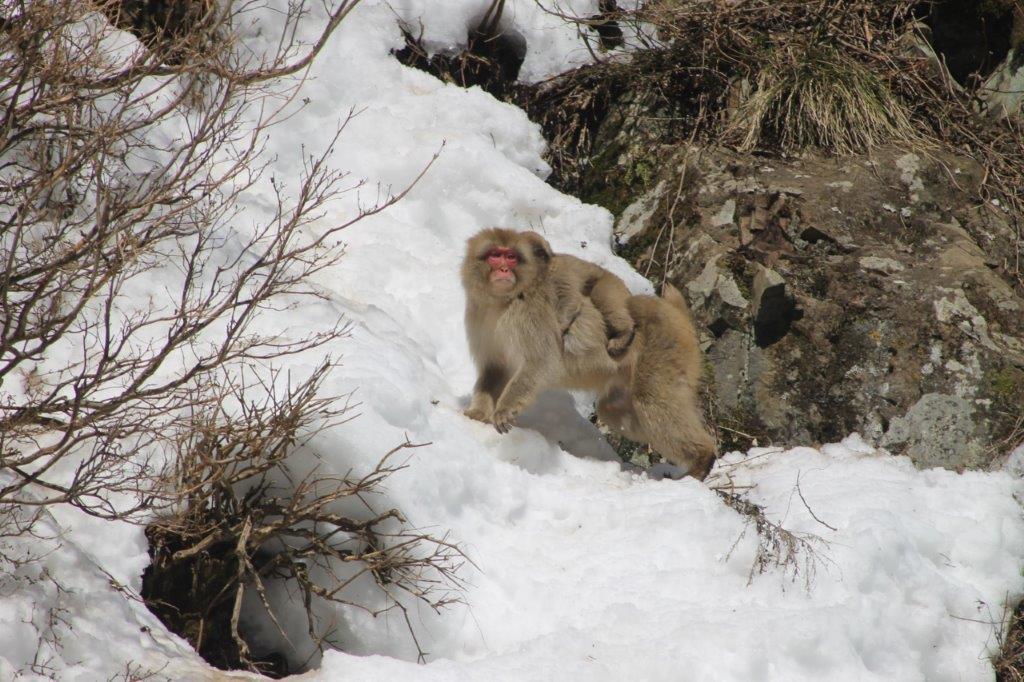 Jigokudani Monkey Park