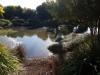 Duck Pond - Toowoomba