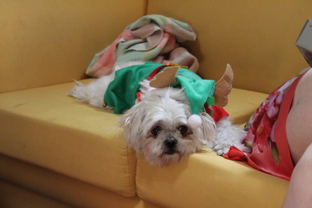 Molly all festive ...